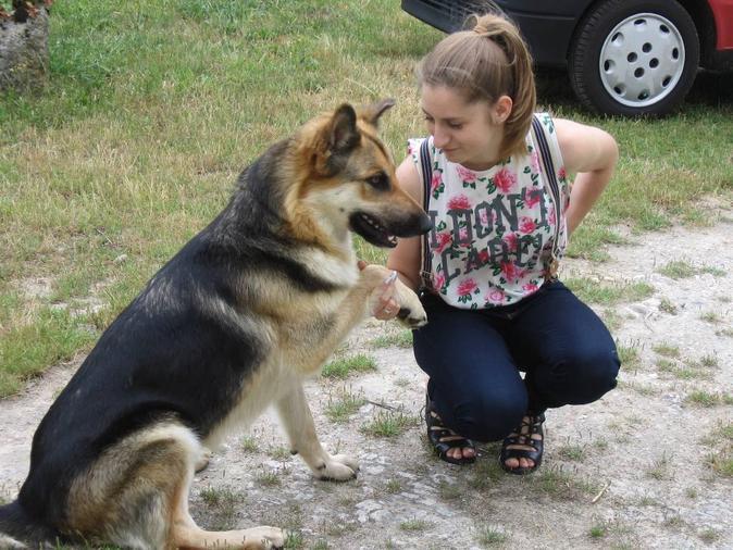 Pour des chiens heureux en promenade ou garderie !, dog sitter à Tours