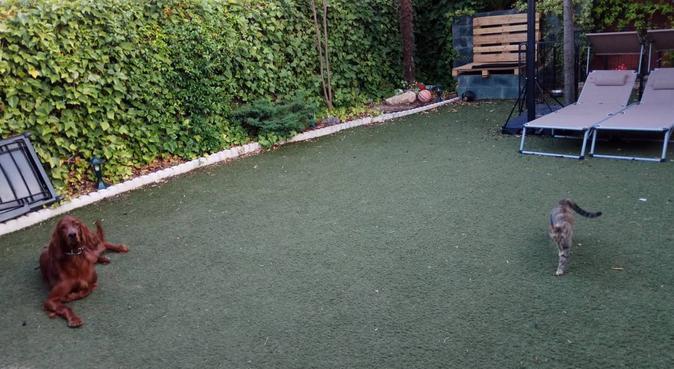 Tu perro como en casa. Gran terraza y jardín., canguro en Leganés