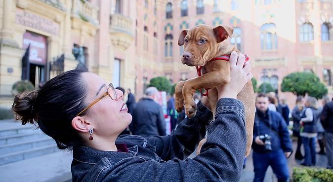 Diversión, Bienestar y Descanso Canino 🐾💛, canguro en Córdoba
