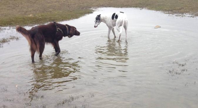 A Calm and Snug Dog Heaven, dog sitter in Bingley