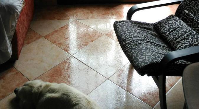 No es una mascota, es mi familia :), canguro en Zaragoza
