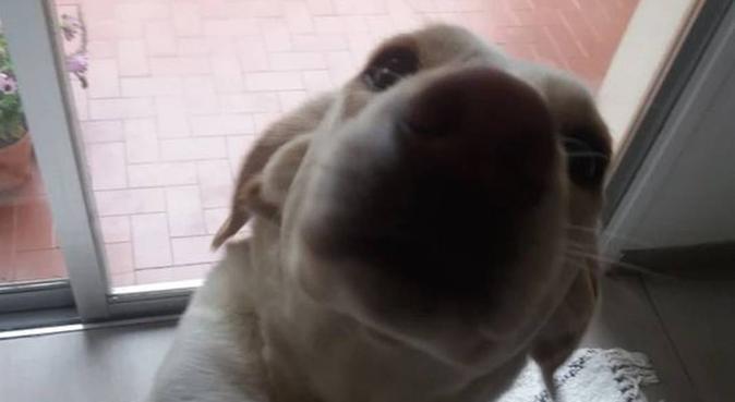 L'amoureux, dog sitter à Cagnes-sur-Mer