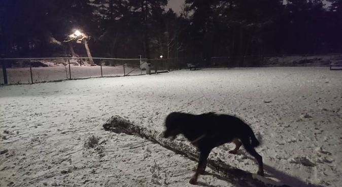 Hundpassning med stor lek-kopis på köpet!, hundvakt nära Stockholm, Sweden