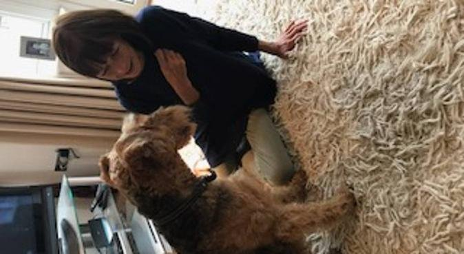 Loving home from home, dog sitter in Chichester