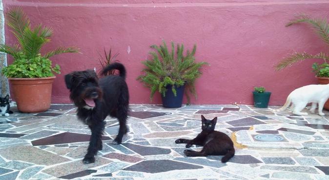 Paseadora amante de los perros, canguro en Vigo