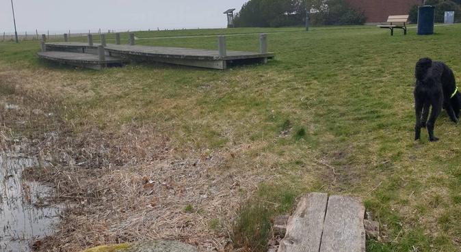 Blivande hundpsykolog passar gärna!, hundvakt nära Malmö
