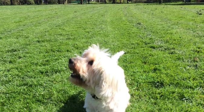 Happy Family dog-loving home, dog sitter in London