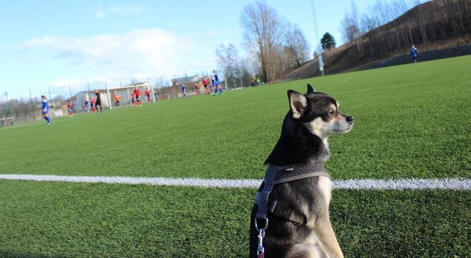 Långa hundpromenader i naturen, hundvakt nära Örebro