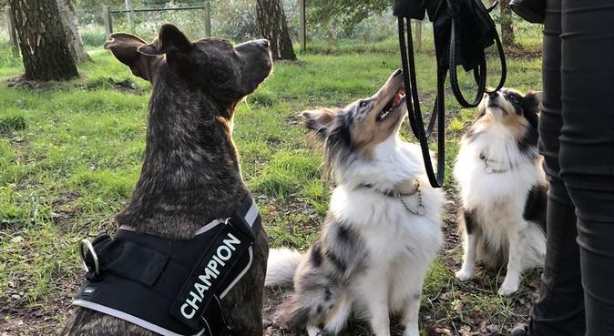 Hundpassning i Halmstad!, hundvakt nära Halmstad, Sverige