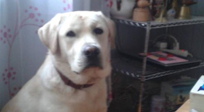Bon soins pour bon toutous, dog sitter à Guilers