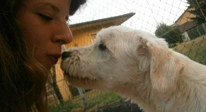 Passeggiate, coccole e attenzioni!, dog sitter a Bologna