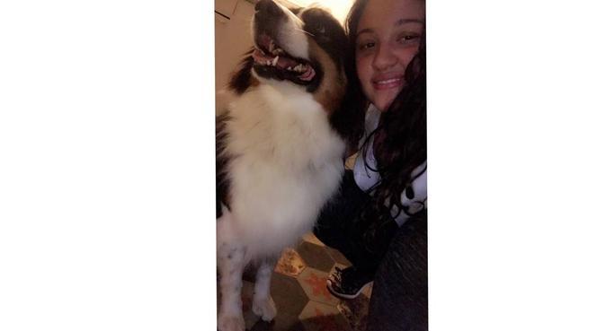 La belle vie des chiens ❤️, dog sitter à Aix en Provence