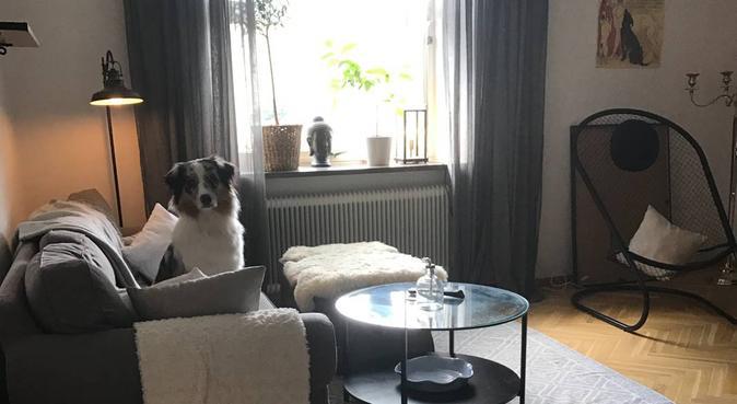 Din hunds hundpassare, hundvakt nära Habo
