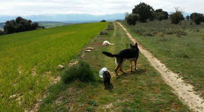 Paseos felices por Madrid, canguro en Madrid, España