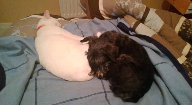 Compagnie canine, dog sitter à Vern-sur-seiche
