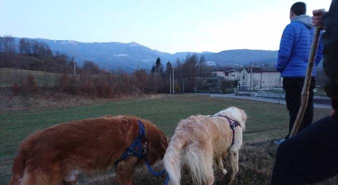 Dogsitter per coccole e passeggiate, dog sitter a Bologna