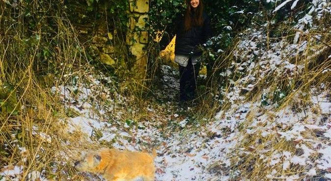 Would love to walk any dog, dog sitter in Canterbury