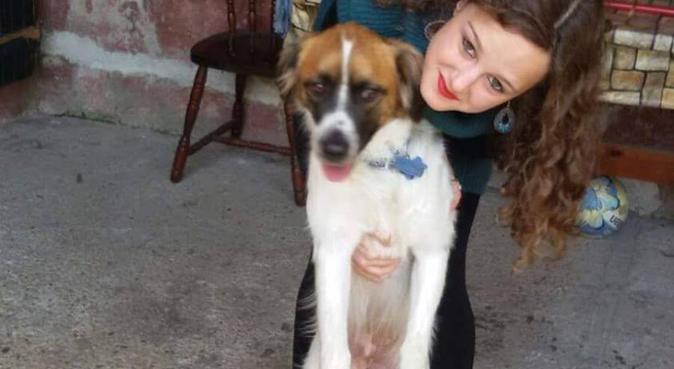 Gli animali sempre al primo posto!, dog sitter a Roma