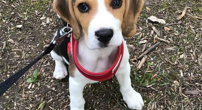 Kirstie's animal retreat, dog sitter in Derby, UK