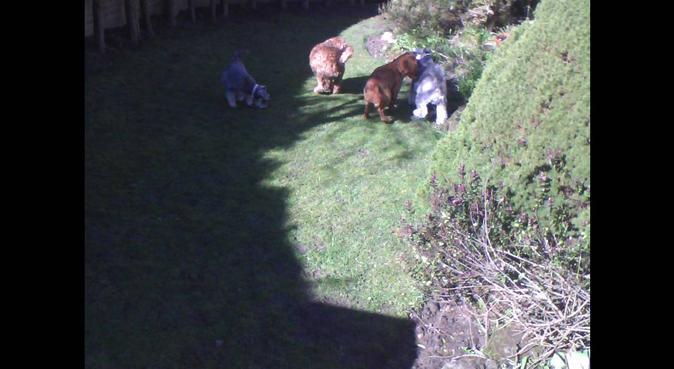 Pannal village dog care, dog sitter in Harrogate