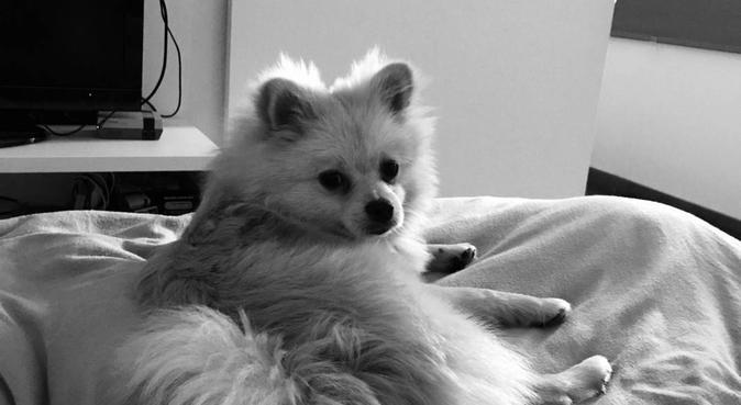 Votre chien a aussi le droit à des vacances, dog sitter à Lille