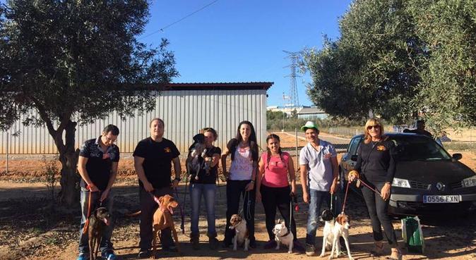 Rutinas diarias de paseo para perros, canguro en Alfas del Pi