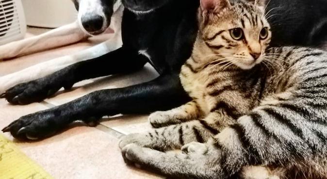Des promenades et des câlins ❤️, dog sitter à Toulouse