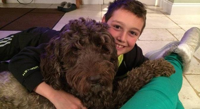 Dog lover available in Glasgow and Durham areas, dog sitter in Durham, UK
