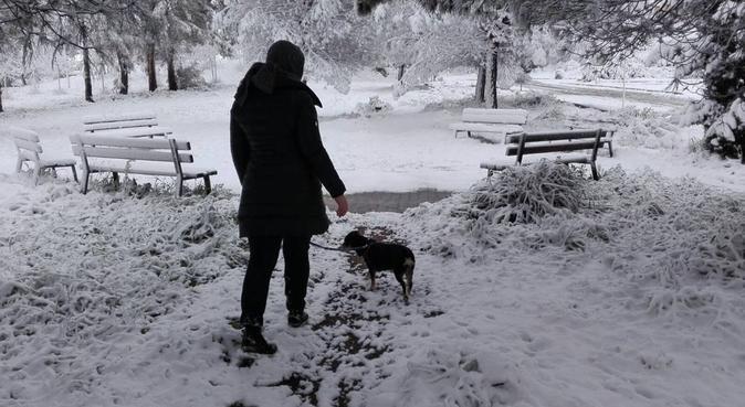 Dog sitter, coccole giochi e lunghe passeggiate!, dog sitter a Roma