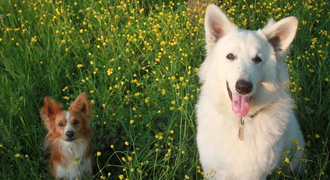 La mia passione: la ricerca del benessere del cane, dog sitter a Padova
