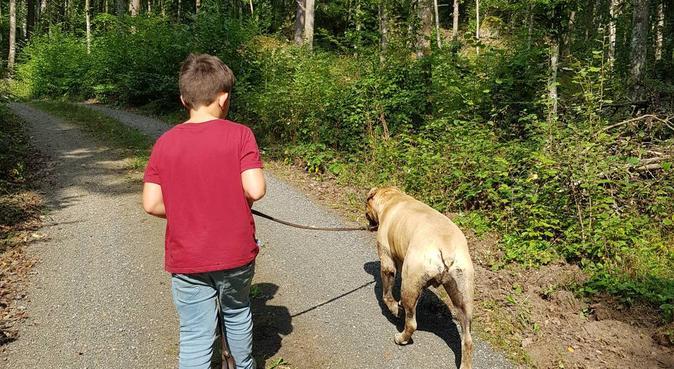 Liten familj med massa hundkärlek (Och erfarenhet), hundvakt nära Malmö