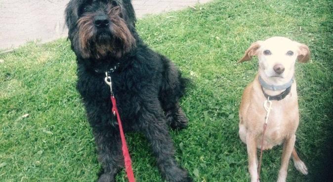 Tante coccole e divertimento per i vostri cani, dog sitter a Lecce