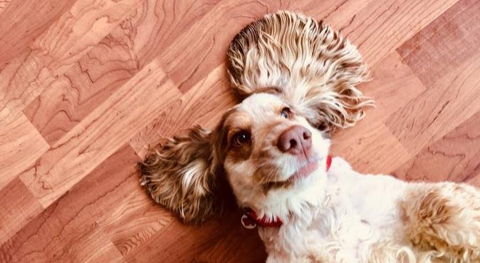 Doggy Play Days, dog sitter in Northampton