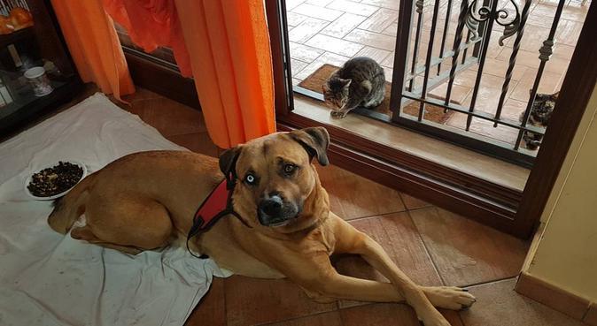 Solo coccole e niente gabbia!, dog sitter a Palermo
