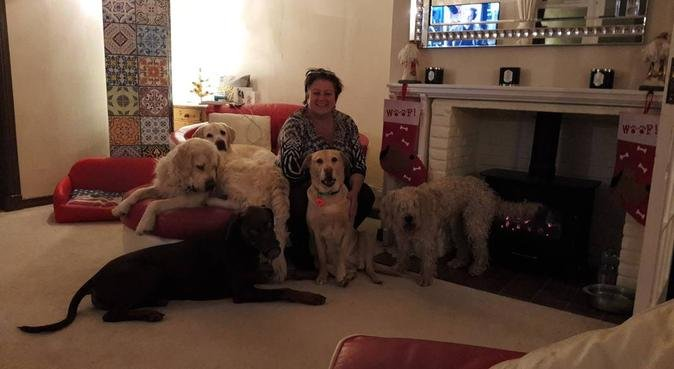 Lindi Loves Dogs! 🐶😍, dog sitter in HAVANT