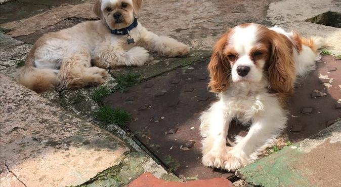 Dog friendly and loving home in Exeter, Devon., dog sitter in Exeter