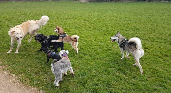 Poochies Daycare & Boarding, dog sitter in Nottingham