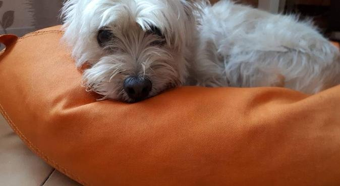 Giochi, passeggiate, divertimento e coccole., dog sitter a Catania