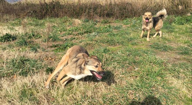 Ciao  mi chiamo Nancy e sono una Dog Sitter, dog sitter a Bacoli, NA, Italia