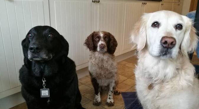 Doggie Dayz - for happy stays, dog sitter in Southampton