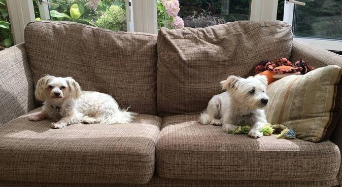 Loving Paws & Tails, dog sitter in London
