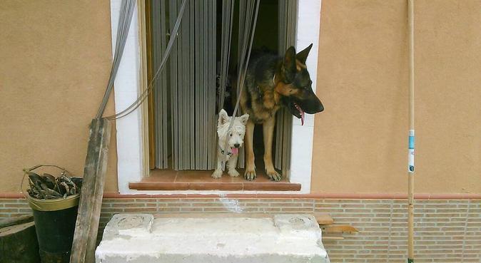 🐕¡Cuidamos de tus mascotas en tu ausencia!🐕, canguro en Cartagena