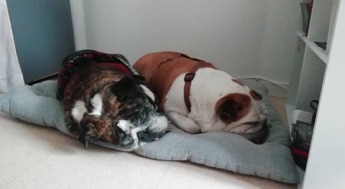 Nounou bienveillante et câline, dog sitter à Courbevoie