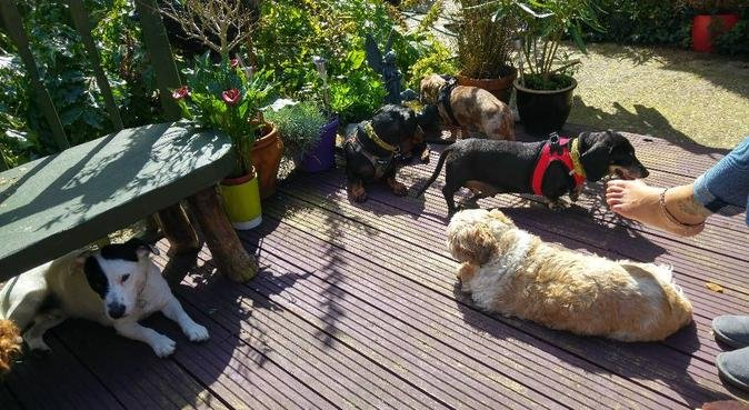 A home from home for pampered pooches, dog sitter in Bournemouth