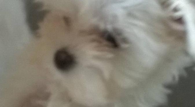 Le Coin des câlins, dog sitter à SAINT GAUDENS