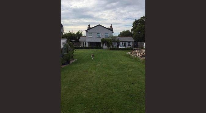 5* Hotel for Dogs., dog sitter in Cardiff