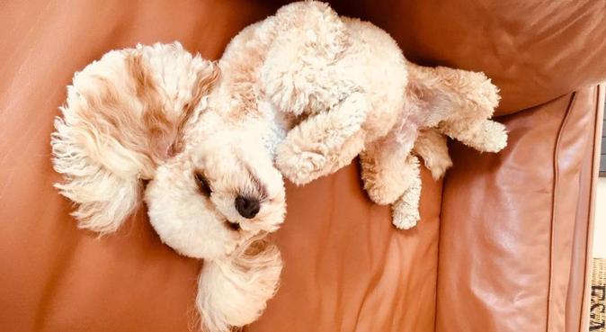 🐶 Vet Assistant/Animal Lover, dog sitter in Barnsley
