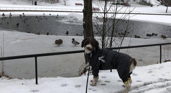 Hundpassning kring Fruängen/Hägersten, hundvakt nära Hägersten