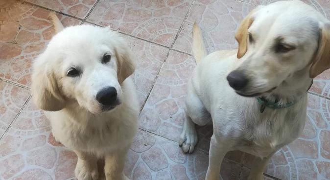 Vive les vacances à La Seyne Sur Mer !, dog sitter à La Seyne