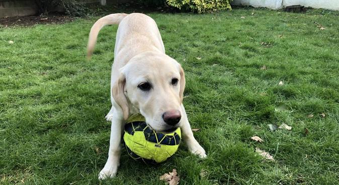 Dog Sitter/Walker in Brentwood, dog sitter in Brentwood